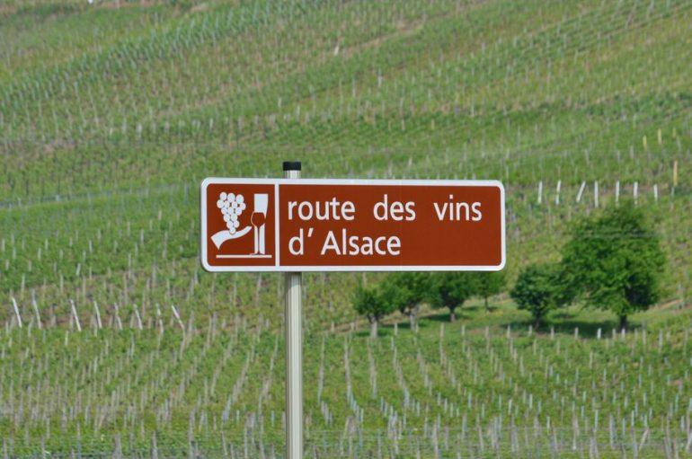 Vins d'Alsace : des cépages d'exception